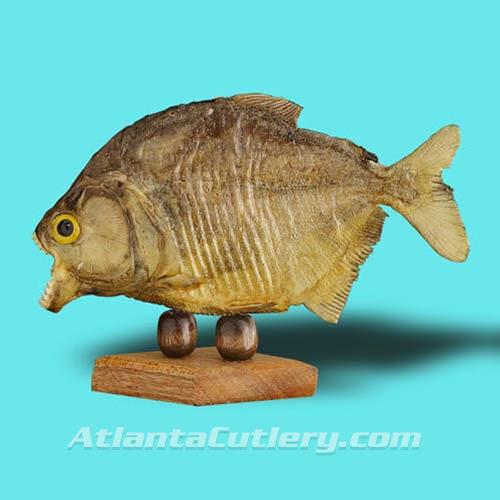 Picture of Authentic Piranha