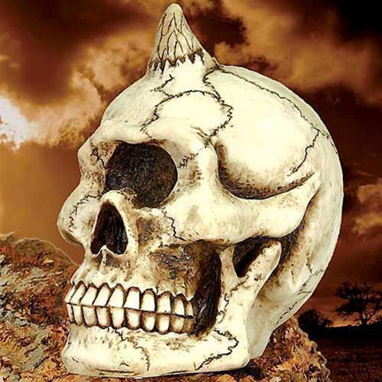 Picture of Cyclops Skull