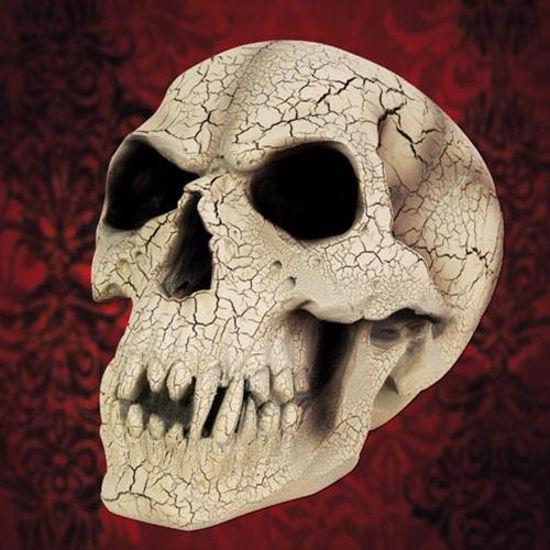 Picture of Vampire Skull