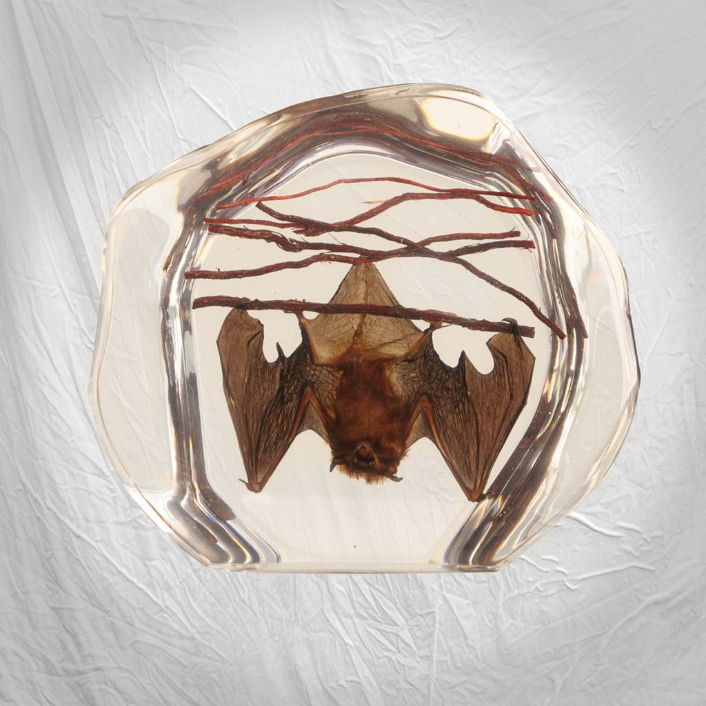Picture of Real Bat Paperweight